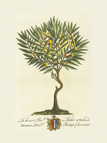 Dionysus Family Tree. The Lord Bishop Of London