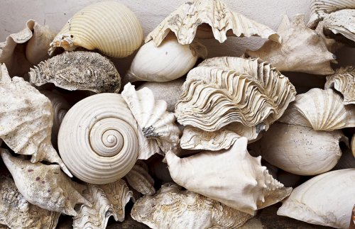Still Life with Shells by Rene Stoeltie