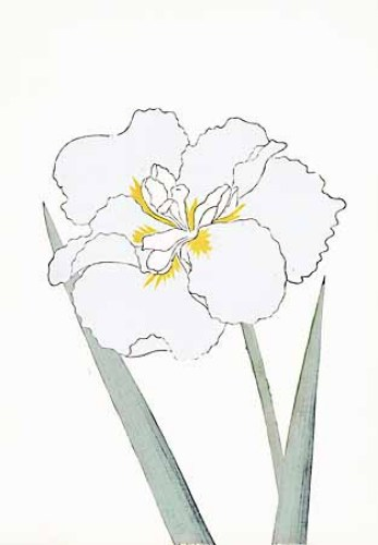 Japanese Irises I IV Japanese Iris I by Modern Editions