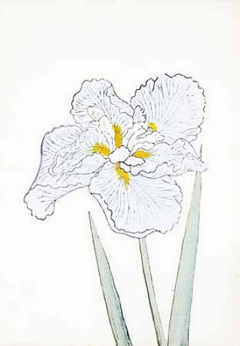 Japanese Irises I IV Japanese Iris II by Modern Editions