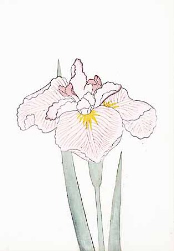 Japanese Irises I IV Japanese Iris IV by Modern Editions