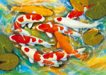 Koi-Carp art print