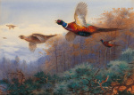 Pheasants in Flight art print