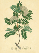 Unpublished East Indian Plants VI art print