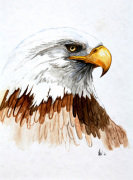 Bald Eagle giclee art print