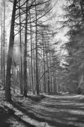 Forest Walk I giclee art print