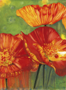 Hot Poppies giclee art print