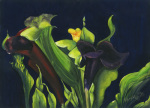 Midnight Lillies giclee art print