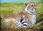 Resting Cheetah giclee art print