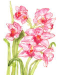 Speckled Orchids giclee art print