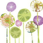 allium spheres giclee art print
