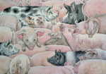 Pig-Spread giclee art print