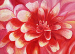 Red Dahlia giclee art print