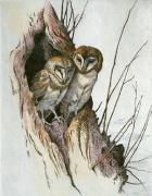 Barn Owls (Restrike Etching) art print
