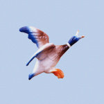 Flying Duck 1 giclee art print