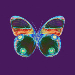 Purple Butterfly giclee art print