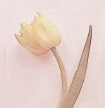 Tulip I giclee art print