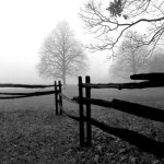 Fence in the Mist giclee art print