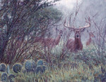 Lone Star Whitetail giclee art print