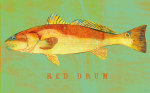 Red Drum giclee art print