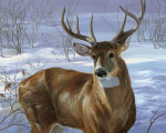 Through My Window- Whitetail Deer giclee art print
