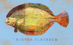 Winter Flounder giclee art print