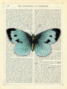 Blue Butterfly giclee art print