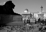 Brooding lion, Trafalgar Square giclee art print