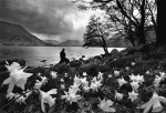 Daffodils at Ullswater Lake District (date unknown) giclee art print