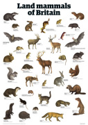 Land mammals of Britain giclee art print