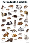 Pet rodents & rabbits giclee art print