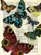 Selection of Butterflies giclee art print