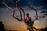 Thomas sits in a tree at sunset Katine 2009 giclee art print