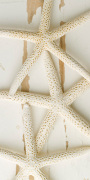 White Starfish on Wood giclee art print