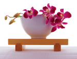 Magenta Orchid in White Bowl art print