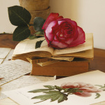 Rose sur livres art print