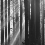 Sunlight in forest art print