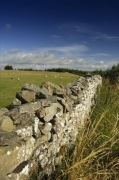 Dry Stone Wall - Yorkshire Dales giclee art print