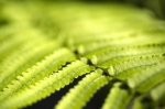 Fern Close Up giclee art print