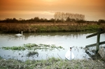 Norfolk Marshes giclee art print
