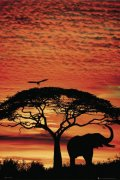Africa Sunset - Elephant art print