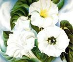 Jimson Weed art print