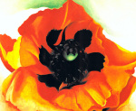 Poppy, 1927 art print