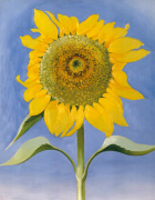 Sunflower, New Mexico, 1935 art print