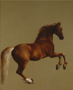 Whistlejacket art print