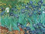 Irises in Garden art print