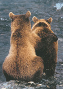Two Bear Cubs art print