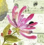 Honeysuckle Script art print