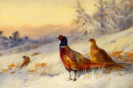 Cock & Hen Pheasant In The Snow art print