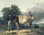 Four Men with a Bull art print